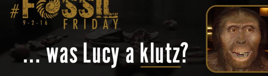 For today's #FossilFriday… was Lucy a klutz?