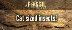 """""""It's a bird… it's a plane…"""" it's #fossilfriday."""